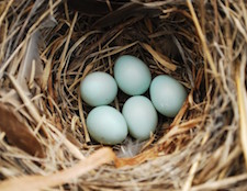 Photo of a nest of eggs as metaphor for a pension / nest egg.