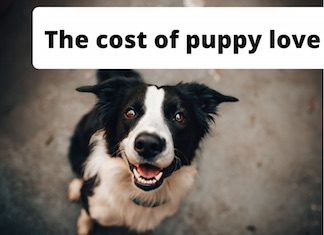 Dogs and financial independence illustration of a happy dog